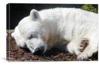 Polar Bear, Canvas Print