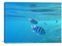 Fish in the Sea, Canvas Print