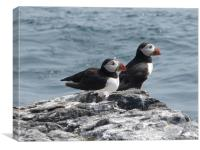 Two Puffins waiting for Tea, Canvas Print