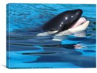Killer Whale, Canvas Print