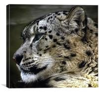 SnowLeopard, Canvas Print