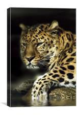 Leopard Aware, Canvas Print
