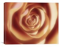 Abstract rose, Canvas Print