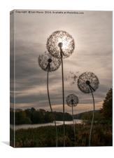 Dandelion Sun, Canvas Print
