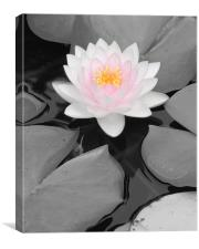 Color Focus Water Lily, Canvas Print