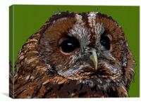 OWLY, Canvas Print