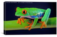 TREE FROG ON BAMBOO, Canvas Print