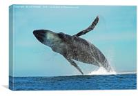 A WHALE OF A TIME, Canvas Print