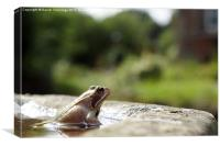 The Common Frog, Canvas Print