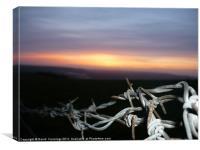 Barbwire Sunset, Canvas Print