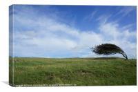 Wind Blown Tree, Canvas Print