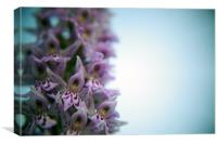 Early Purple Orchid Close Up, Canvas Print