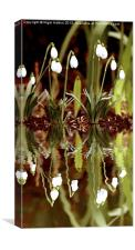 Snow Drop Reflections, Canvas Print