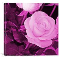 plum rose, Canvas Print