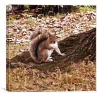 Squirrel Nutkin, Canvas Print