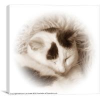 Shhhh!!, Canvas Print