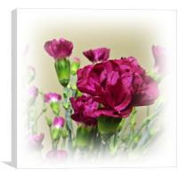 Carnations, Canvas Print