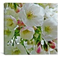 Cherry blossom watercolour, Canvas Print
