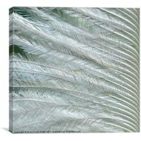 Feather Green, Canvas Print