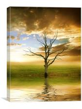 Sunset tree, Canvas Print