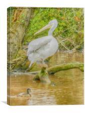 Pelican perch, Canvas Print