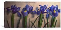 Vintage Irises, Canvas Print