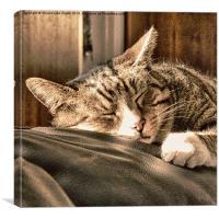 Sleeping tigers, Canvas Print