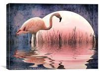 Flamingo Moon, Canvas Print