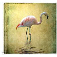 Flamingo, Canvas Print