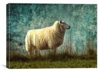 Vintage Sheep, Canvas Print