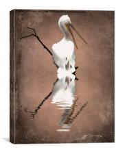 Pelicans perch 2, Canvas Print