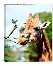 Just a Giraffe and a friend, Canvas Print
