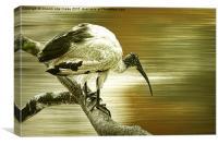Ibis, Canvas Print