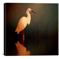 Midnight Egret, Canvas Print