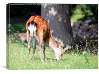 Bambi, Canvas Print