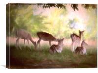 Deer Park, Canvas Print