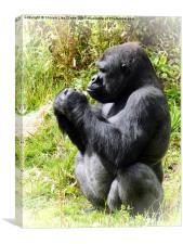 Curious Gorilla, Canvas Print