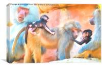 Baboons, Canvas Print