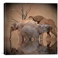 The old herd, Canvas Print