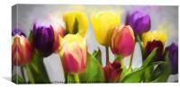 Tulip Haze, Canvas Print