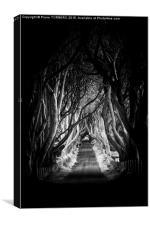 Vert Irlande- The Dark Hedges., Canvas Print