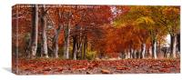 Gordonstoun Autumnal Walk, Canvas Print