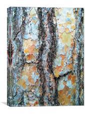 Tree Bark, Wisley Gardens, Surrey., Canvas Print