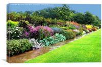Herbaceous border after rain., Canvas Print