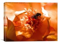 Pollen Feast, Canvas Print