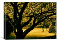 Old Indian Bean Tree, Canvas Print