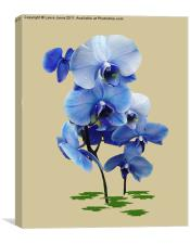 Blue Orchid, Canvas Print