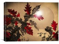 Red Oak leaves, Canvas Print