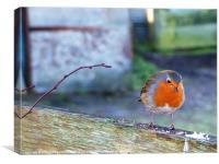 A curious robin