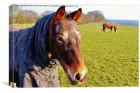 Black Country Horse, Canvas Print
